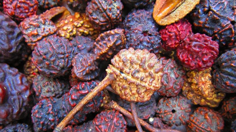 Amazing Benefits of Rudraksha