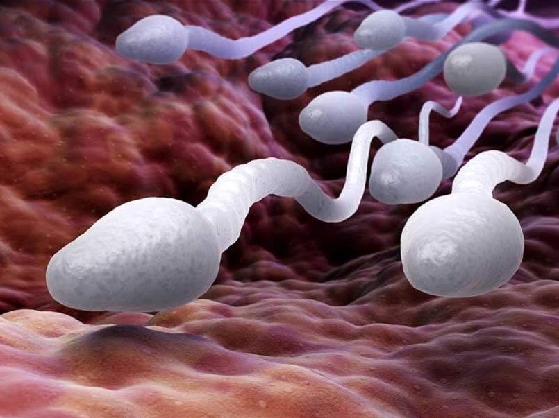 Azoospermia – Male Infertility Treatment In Ayurveda