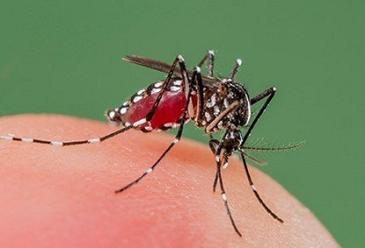 Dengue Treatment In Medical Astrology