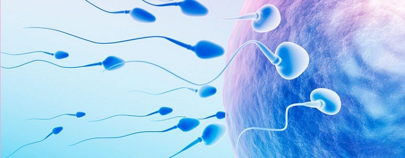 Male Infertility Treatment By Ayurveda